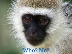 Who, me?